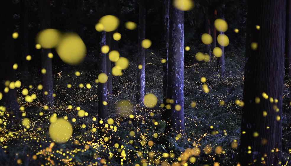 Nori Yuasa - Getty Images